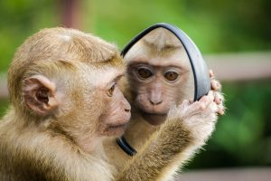 Monkey looking in mirror