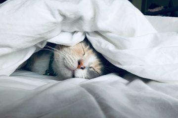 שינה מנצחת